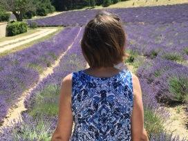 Linda Lavender fields