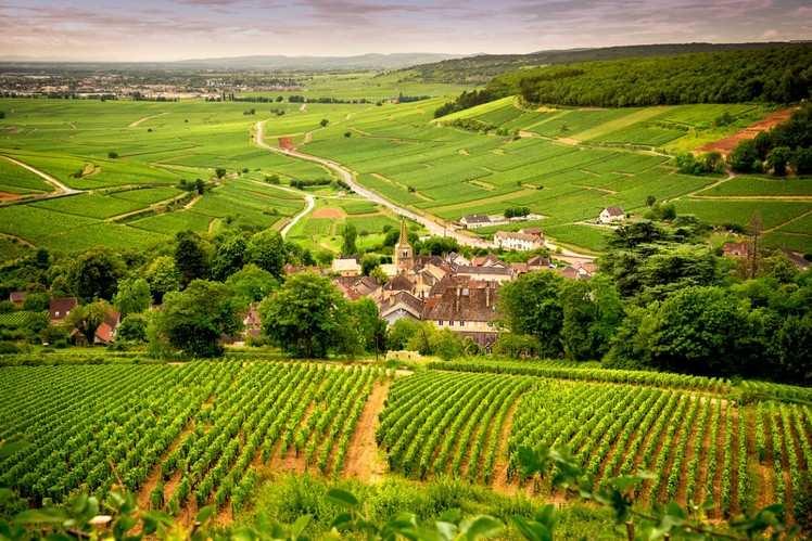 Wine of Burgundy
