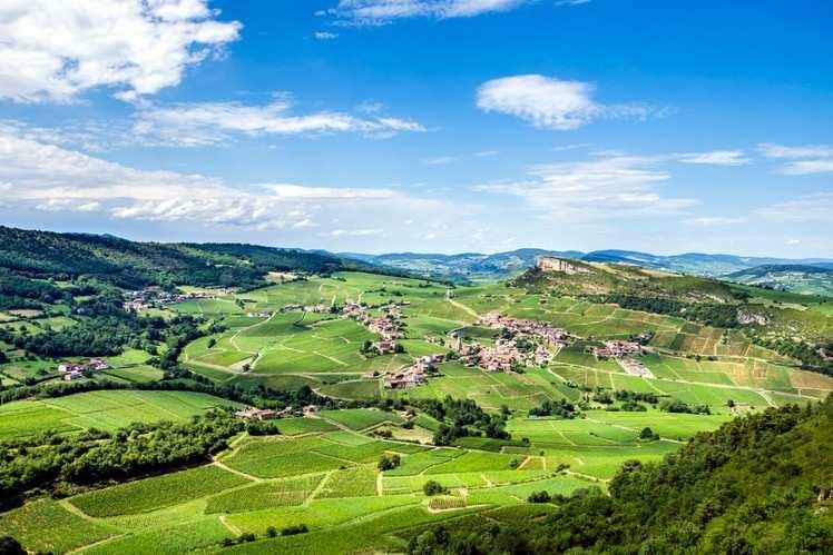 Wine of Loire Valley